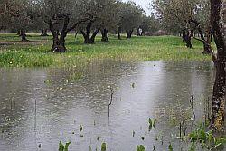 """Palermo, 24 gen- Flai Cgil, Fai Cisl e Uila Uil siciliane, chiedono alla Regione di dichiarare lo stato di emergenza e di calamità per l'ondata di maltempo che ha colpito l'sola e che sta provocando ingenti danni all'agricoltura. """"E' urgente- scrivono in una nota i segretari regionali delle tre organizzazioni, Alfio Mannino, Calogero Cipriani e"""