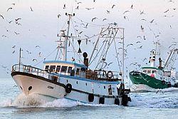 Pescherecci mazaresi in pericolo nelle acque internazionali antistanti la Libia. Tumbiolo scrive al Presidente Gentiloni