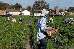 Agricoltura: sindacati chiedono immediata istituzione cabina regia regionale contro sfruttamento e lavoro nero