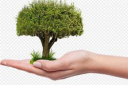 Ambiente: Ecoitaliasolidale festeggia giornata nazionale alberi, piantando un albero a Roma e a Pantelleria