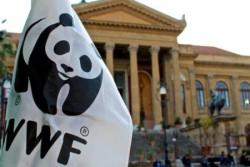 #Connect2Earth #EarthHour #OraDellaTerra Saranno presentiEnzo Mancuso con i suoi pupi siciliani, Paolo Zarcone con la sua chitarra e…al buio splenderà la bandiera del Panda. . Sabato 30 marzo ore 20:30. Piazza Verdi antistante Teatro Massimo. ________________________________ Note: Per un Pianeta vivente, vincere le grandi sfide della Natura e del Clima FERMARE LA PERDITA DELLA BIODIVERSITÀ,