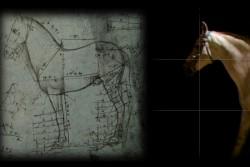 GAM Palermo mostra Leonardo. La macchina dell'immaginazione, esposizione multimediale a cura di Treccani, progettata e messa in scena da Studio Azzurro